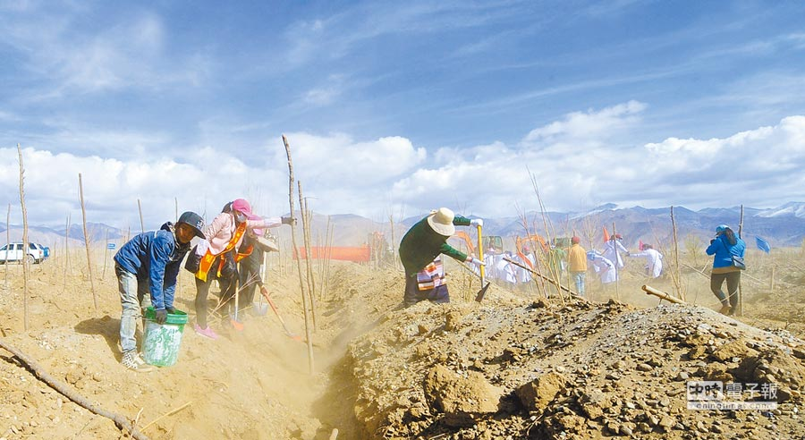 民眾在西藏雅江北岸荒河灘上植樹造林。(新華社資料照片)