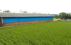 畜牧廢水變黃金 台中輔導8畜牧業「沼液沼渣」水稻施肥