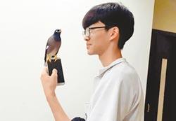 八哥鳥有靈性 絕不靠近佛堂