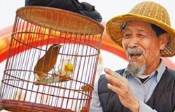 賞鳥解憂 增生活情趣 心態更年輕