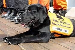 退役搜救犬Bailey逝世  北市消防局:永遠的英雄!