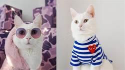 簡直潮到出水!潮模貓咪跟著主人玩穿搭,把潮牌穿的更具獨特風格
