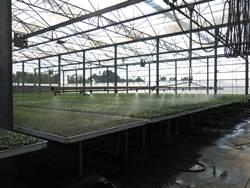 有機農業促進法通過 農委會:農業發展新里程