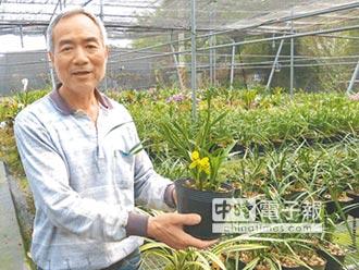 花博綠手指 育蘭300種