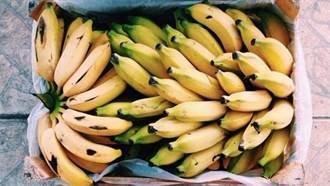 香蕉皮滅蟑竟然超有效!4種不為人知的「神奇妙用」