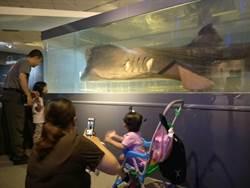 國際博物館日 千人入海科館賞巨口鯊