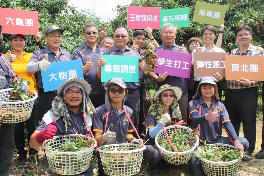 ▲農委會啟動區域農業人力調度機制,採收荔枝免煩惱。(林雅惠攝)