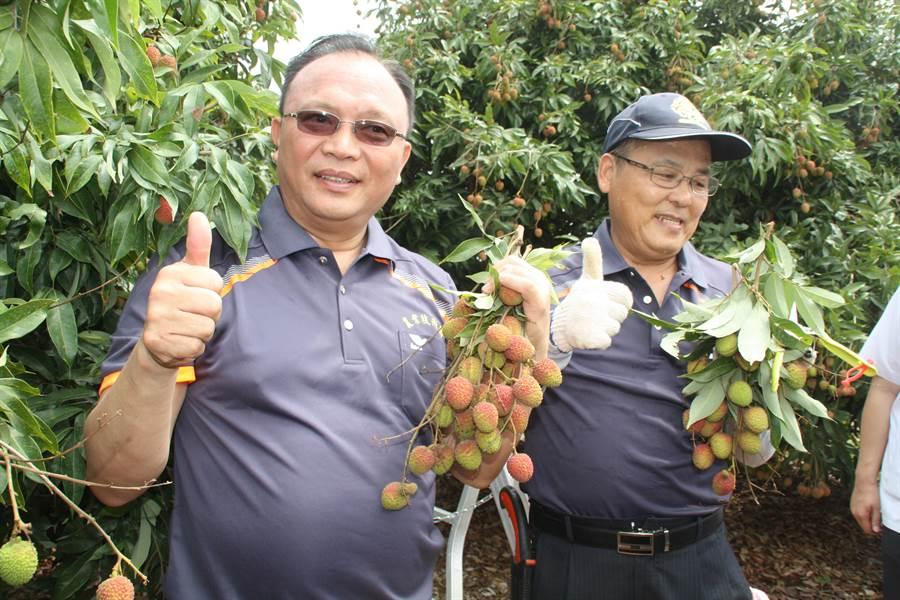 ▲農委會林聰賢(左)率領先遣部隊8人前往大樹荔枝園,支援玉荷包採收。(林雅惠攝)。