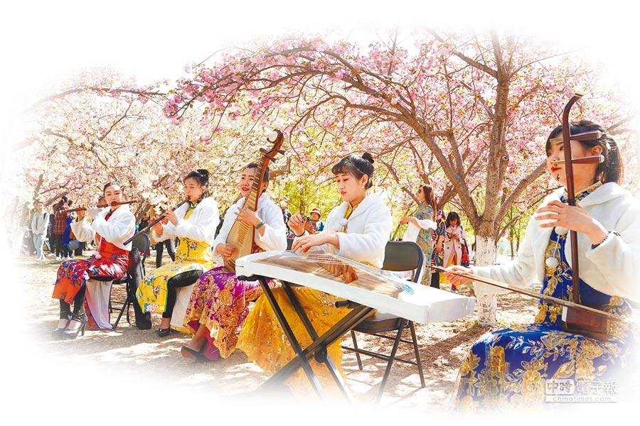4月11日,北京玉渊潭公园晚樱林中,民乐演员演奏经典乐曲。(新华社)