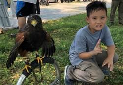 老鷹生態快閃課程 百位親子與5、6隻老鷹近距離接觸