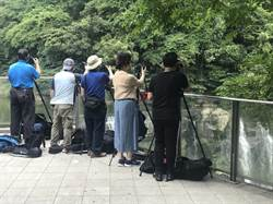 風景名勝遭攝影腳架「霸位」遭酸「台灣最美的風景」