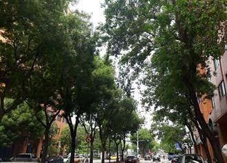 因應颱風及汛期 中市府修剪1500棵行道樹