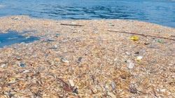 布袋蓮夾雜垃圾 入侵碧砂漁港