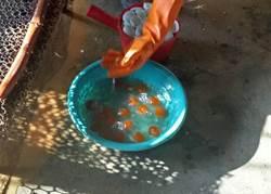 食安有漏洞 鹹蛋黃殘留工業染劑只能詐欺起訴