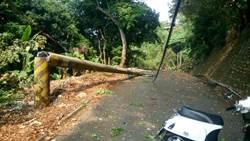 南投山黃麻樹倒壓斷電桿 受天宮百攤商停電