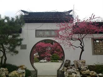 台灣人看大陸》植物園賞花 看金庸的家(上)