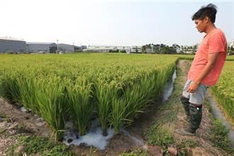 南屯楓樹里農田灌溉溝遭倒廢液 市府清除並全力追查中