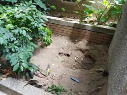 開挖化糞池找不到台大女內臟 他大膽預測:兇嫌可能吃掉了