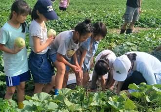 學童下田種美濃瓜 陸續採收做公益