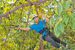 300年老木棉擾民 攀樹達人來解危