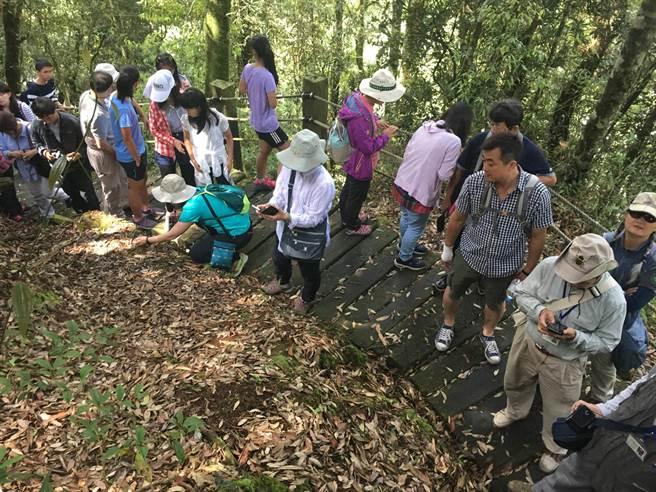 參加研討座談會的學術界與生界人士,實地踏勘尋找著生杜鵑,並在步道旁發現許多水晶蘭。(沈揮勝攝)