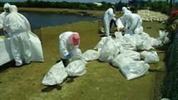 熱浪襲來人熱昏肉鴨還爆禽流感 撲殺2505隻
