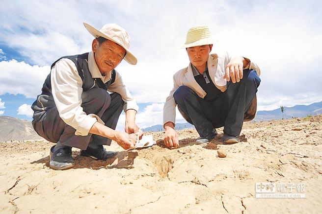 西藏山南地区农科人员在勘察乾旱情形。(新华社资料照片)