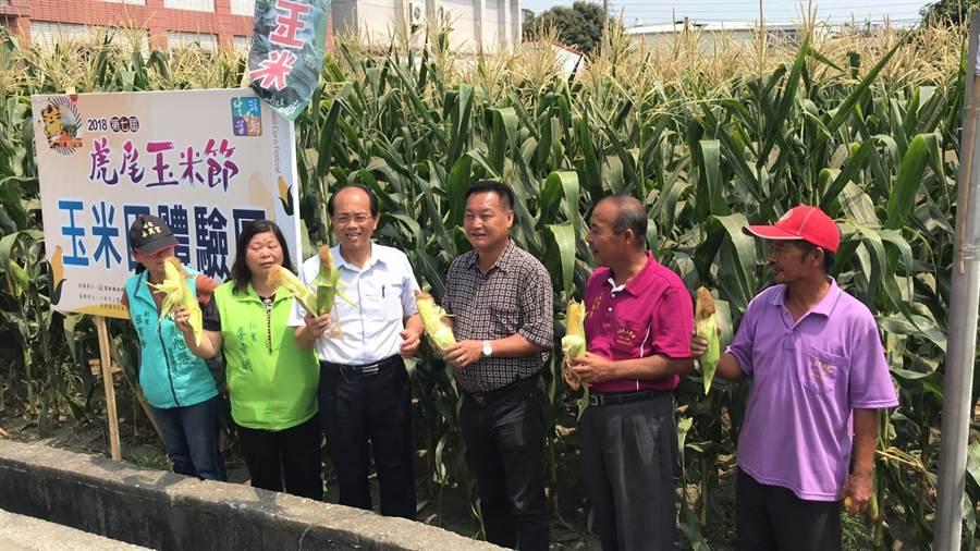 雲林玉米節將開放玉米田讓民眾體驗採玉米。(許素惠攝)