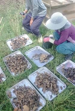 嘉義排水改善工程 挖出19具人體骸骨