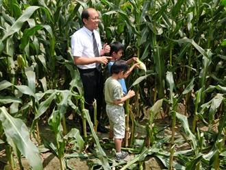 虎尾玉米節拜六房媽採玉米