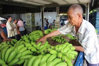 香蕉惹禍?旗山大盤商遭圍毆 主嫌供稱是談芒果