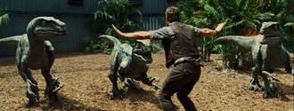真實的侏羅紀世界:迅猛龍其實只有火雞大