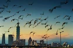 台北101國際攝影大賽  國際參賽作品破紀錄