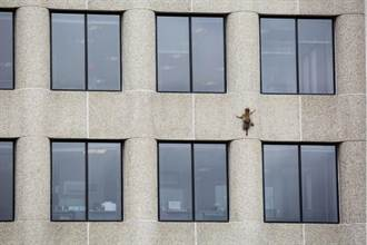 影》求生峰會!浣熊當蜘蛛俠攻頂摩天樓成網紅