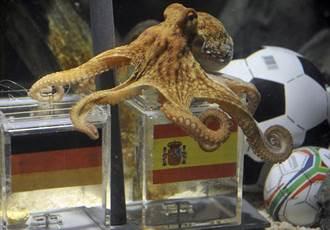 世足花絮》神算章魚哥保羅 AI預測能超越?