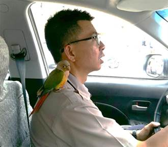耍帥員警肩膀帶小鸚鵡值勤? 找牠的主人啦