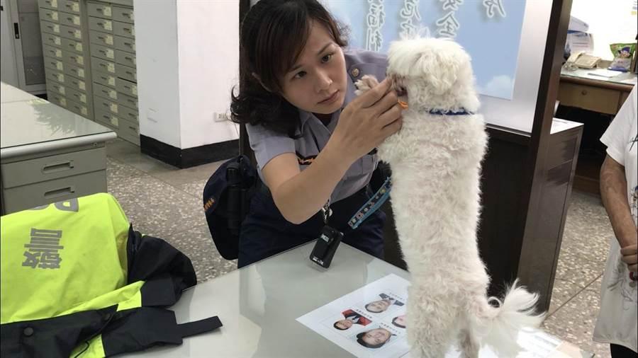 男子疑似虐狗PO網,警方迅速到場救狗逮人。(呂筱蟬攝)