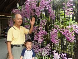 蘭園主人馬天官用心育出蘭花新品種