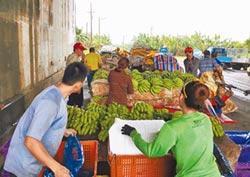 雲縣議員抨擊 蕉價崩盤 台農發害的