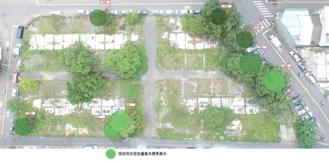台中市北屯區北屯段社會住宅基地,現地符合受保護樹木的標準喬木。(圖/台中市府提供)