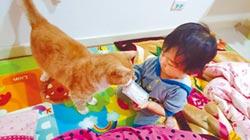 員警救回棄貓 女兒親密玩伴
