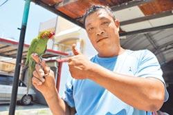 鸚鵡黏人愛撒嬌 他樂當鳥奴