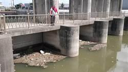 大雨致水質混濁 安良港大排魚群暴斃