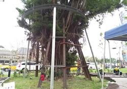 搶救台中火車站舊站前老樹 中市府設「樹木保護區」