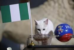 世足花絮》阿根廷要哭了嗎? 「神貓」預測奈及利亞勝