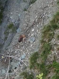 台北失蹤2日夫妻 墜百米中橫山崖身亡