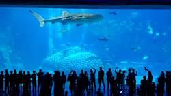 珠海化身旅遊城市 長隆海洋王國最具人氣
