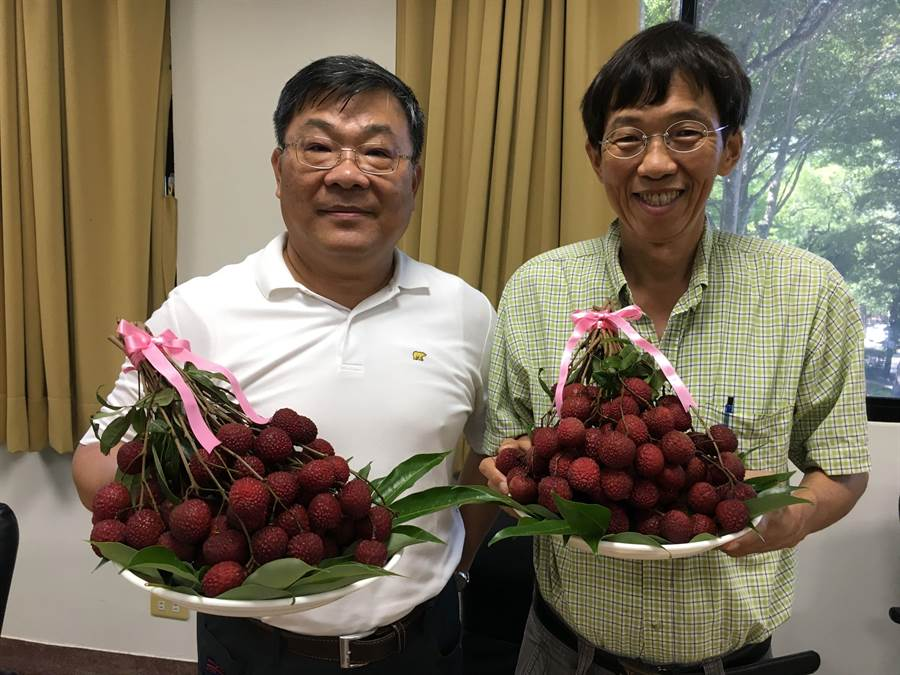 嘉義農試所長楊宏仁(左)、主任張哲瑋發表「台農5號紅寶石」新荔枝。(廖素慧攝)
