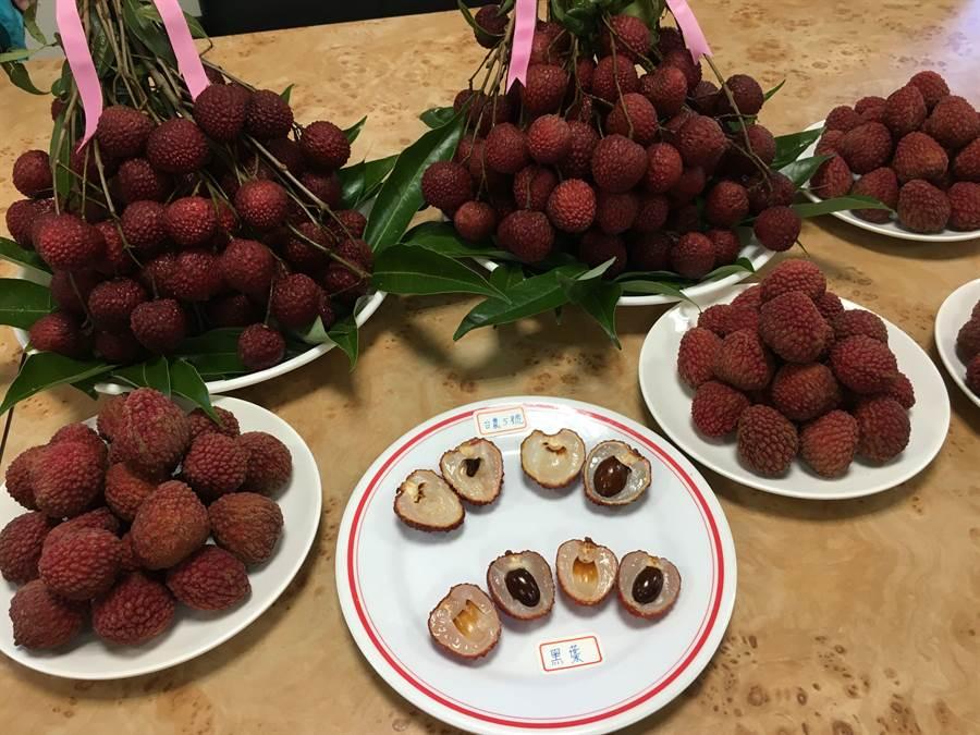 「台農5號紅寶石」新荔枝的種子比黑葉荔枝小很多。(廖素慧攝)