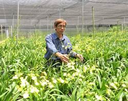 洪志文響應台中花博 推廣在地花卉年產100萬支文心蘭